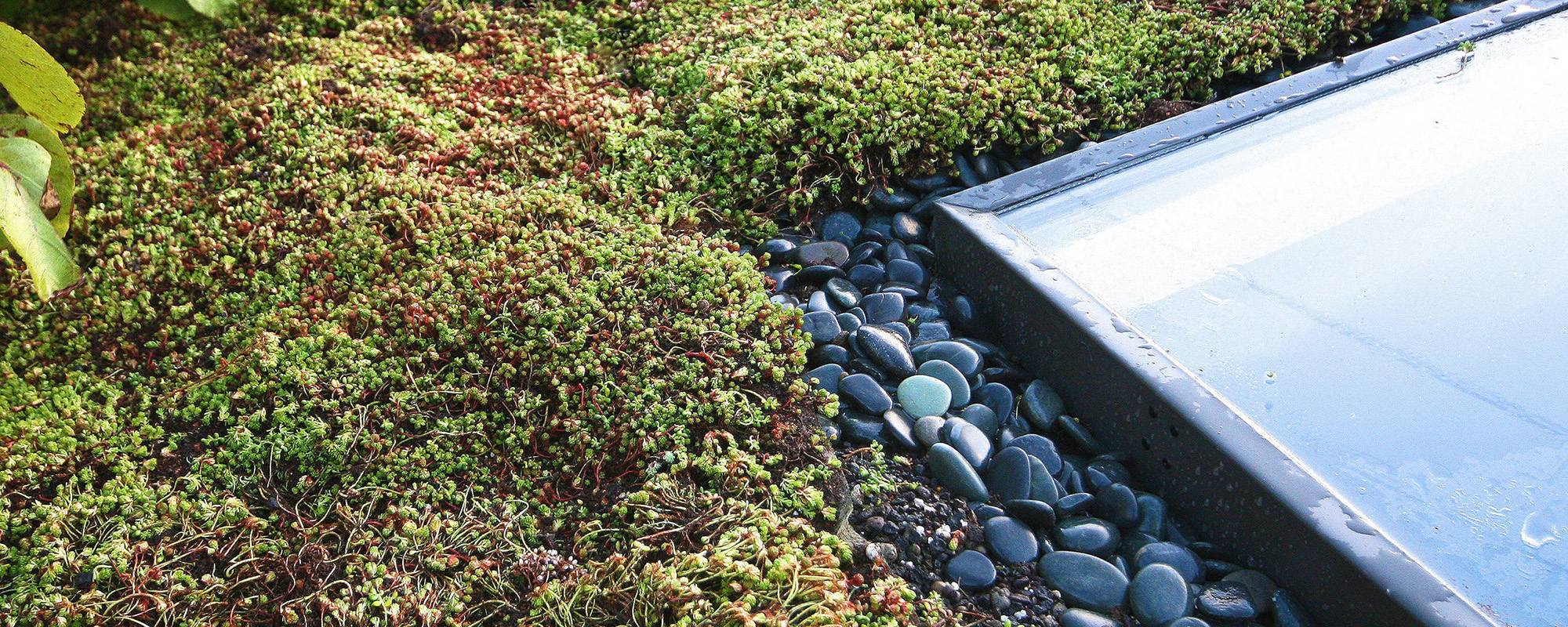 Green roof by Tom Spriggs Architect